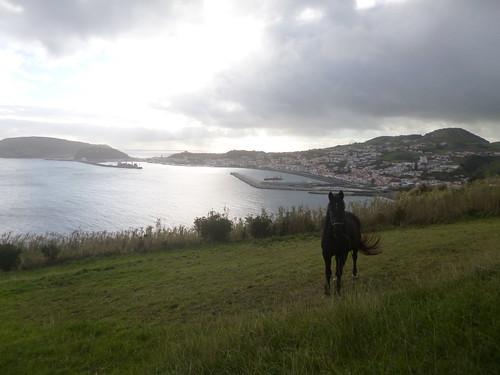 horta cavalo