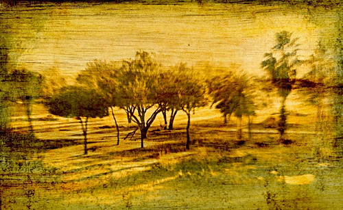 Trees along the savanna