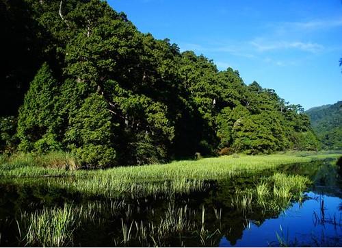 東亞黑三稜在湖域的分布情形