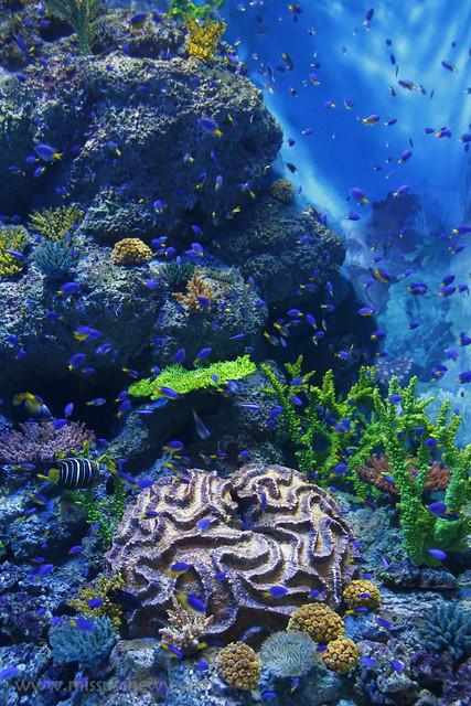 RWS S.E.A Aquarium 523