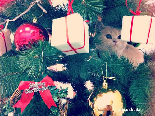 Spot the furry ornament within the Christmas tree!