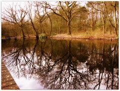Bare Trees Reflections...