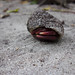 Small photo of Hermit crab