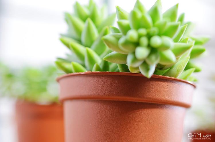 2012多肉植物18.jpg