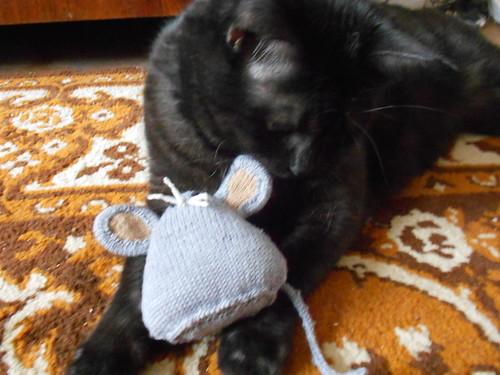 муся нюхает мыша феофана
