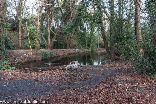 Bushy Park In Terenure (Dublin) - New Years Day 2013: Photography 85,000 by infomatique