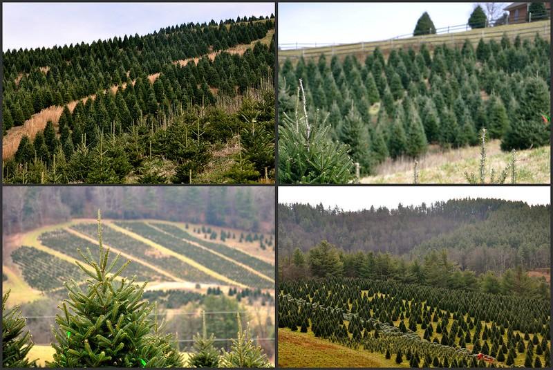trees. trees. trees
