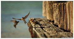 Sunset Birds on the Sea Wall