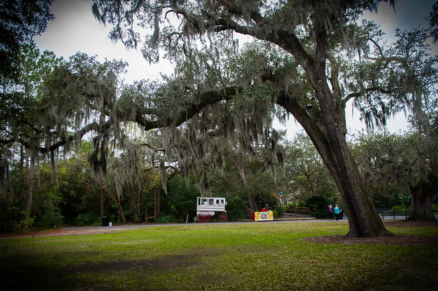 Candy carts and spanish moss