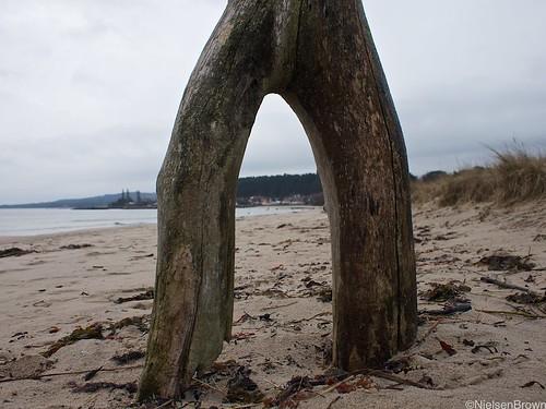 Wooden Legs Vitemölla