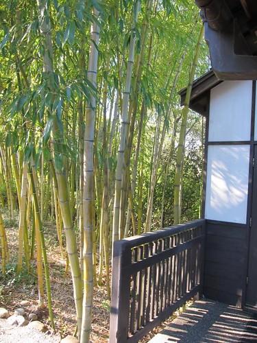 Hakone Japanese Gardens, Saratoga, CA, bamboo IMG_2312