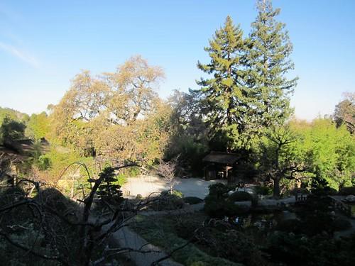 Hakone Japanese Gardens, Saratoga, CA, tree IMG_2396