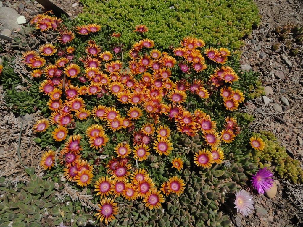 Denver Botanic Gardens official site\'s most interesting Flickr ...