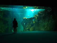 Inside the aquarium in La Rochelle