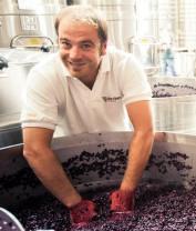 The Vines y sus 350 estilos de vinos