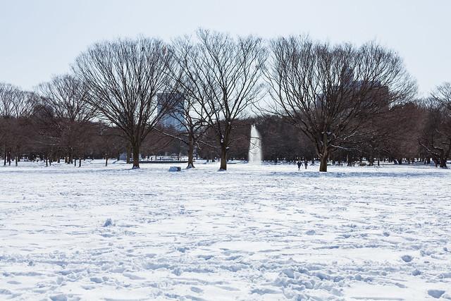 20130115_01_White Yoyogi Park