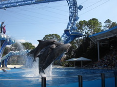 Dolphin show iii