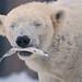 Lara und Bill - Wie lockt man einen Eisbär? - Januar 2013