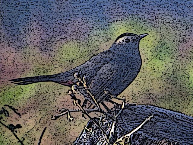 Grey Catbird filter