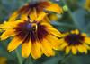 Botanic Gardnes-057