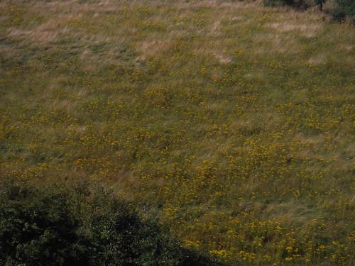 Flowers in Kit Hill Bottom