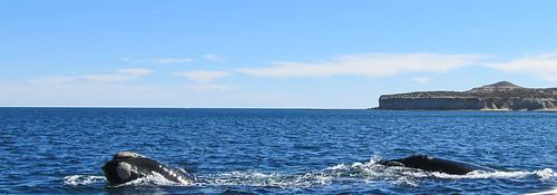 Puerto Piramídes