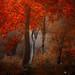 My Paradise - EXPLORE 19/12/2012 by ildikoneer