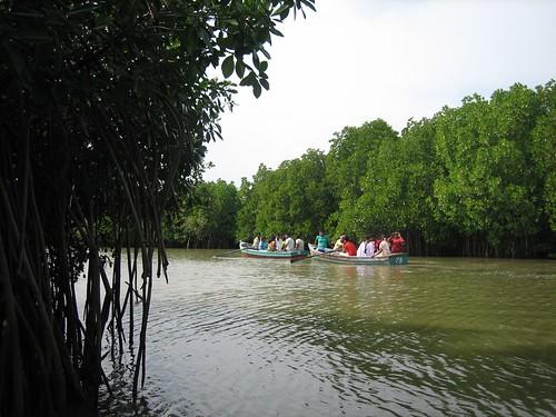 Pichavaram mangrove forest, near Chidambaram