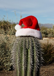 Santa Hat on Saguaro