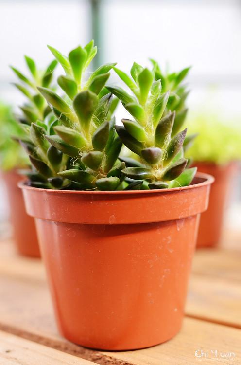 2012多肉植物02.jpg