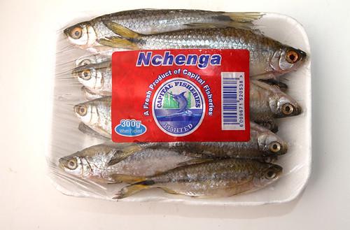 nchenga