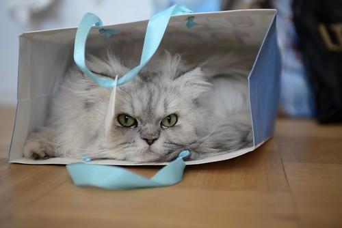 [フリー画像素材] 動物 (哺乳類), 猫・ネコ ID:201301091000