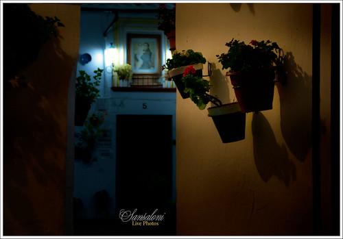 Noche Andaluza by Sansa - Factor Humano