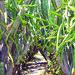 Plantas de pitaya y pitahaya by pitayapitahaya
