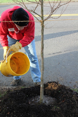Lents-Powellhurst-Gilbert Planting, Jan. 12, 2013