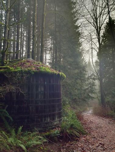 trees mist forest path reservoir