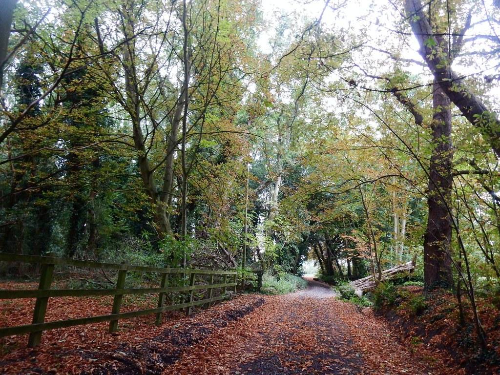 Autumnal scene St Margarets Circular