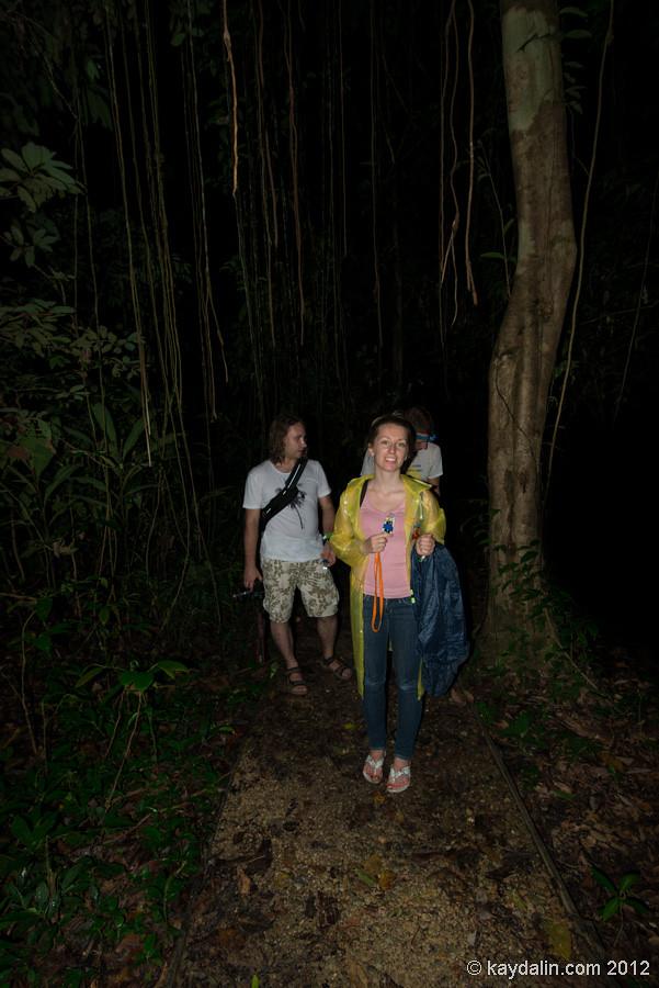 mulu nightwalk, malaysia