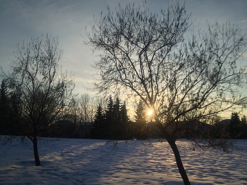 trees winter light sunset shadow snow cold field mobile silhouettes magichour iphone davidsmith calgaryalbertacanada