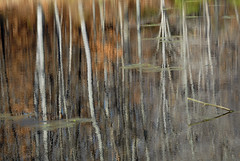 landscapes/nature