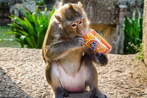 Monkey likes Fanta