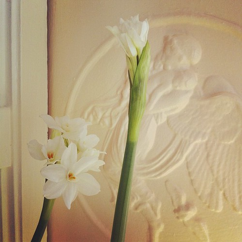paperwhites are blooming #yule #deckthehalls