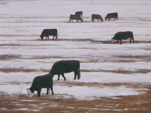 Pamela Kendall Schiffer, Grazing Cows, Winter, 2008