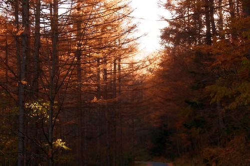 japan forest