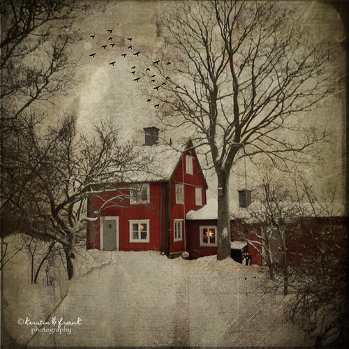 trees winter house snow building tree texture photoshop magicunicornverybest kimklassentexture kerstinfrankart