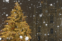 [Free Images] Events, Christmas, Christmas Tree, Churchs / Catedrals, Snow ID:201212282000