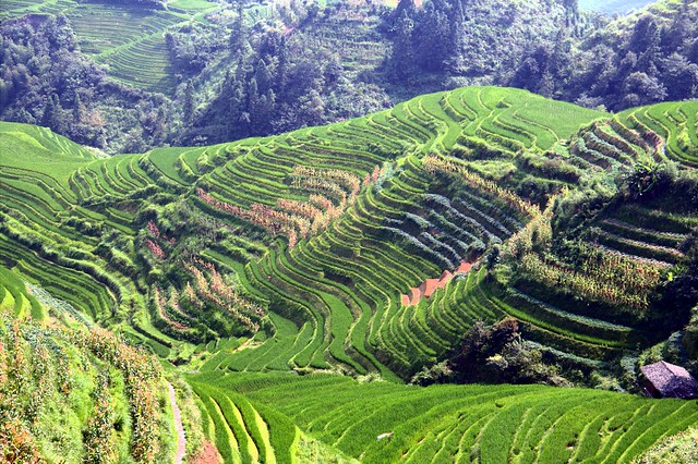 Longsheng rice terrace definition meaning for Terrace farming meaning