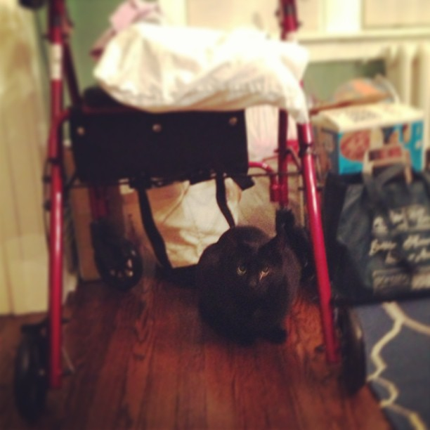 Gibson has found a new spot. Under Gram's walker.