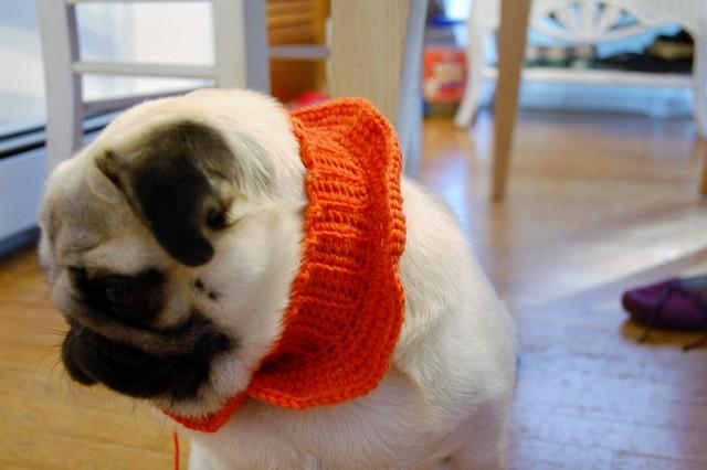 wip agamemnon's pug sweater