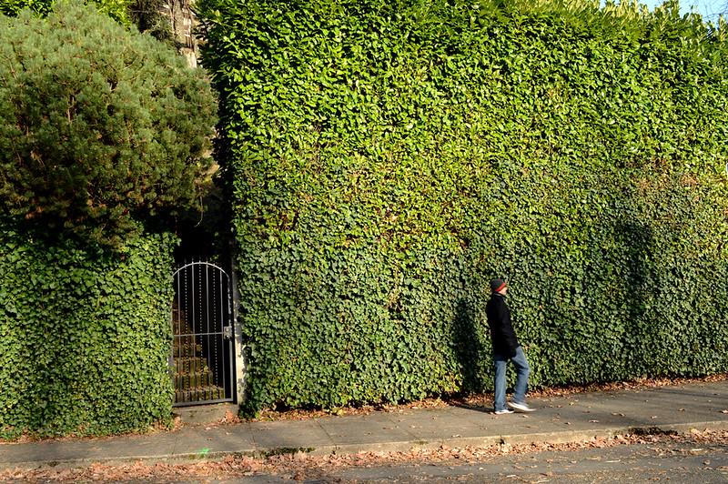 Big Ivy Wall